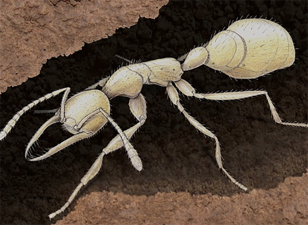 Рисунок муравья Martialis heureka