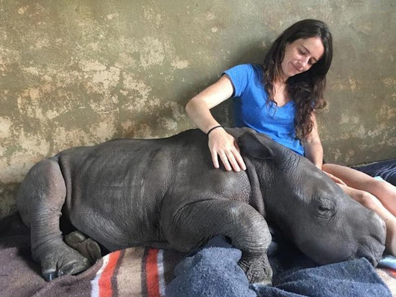 Трогательные объятия волонтёра и носорога из южноафриканского приюта были сняты на видео