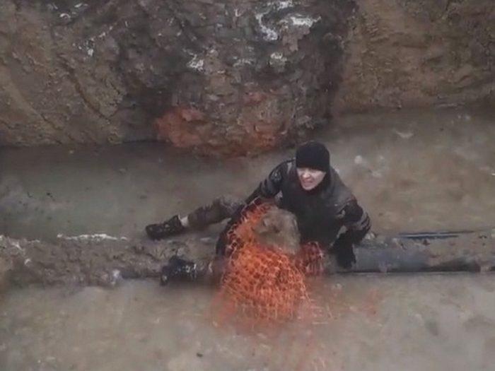 Волонтёр Алексей спасает Весту