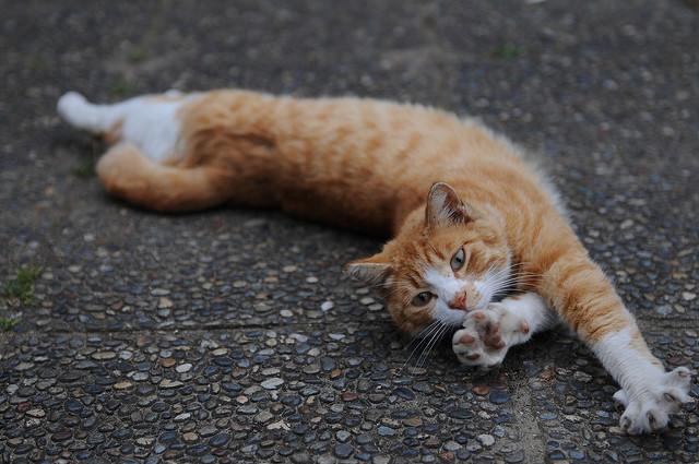 Кошка потягивается после сна