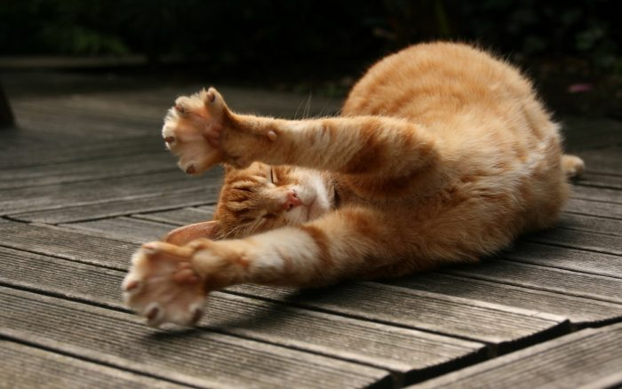 Рыжий кот дежит на досках и потягивается