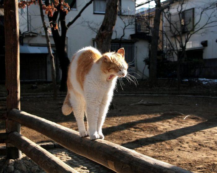 Кошка потягивается и зевает на заборе