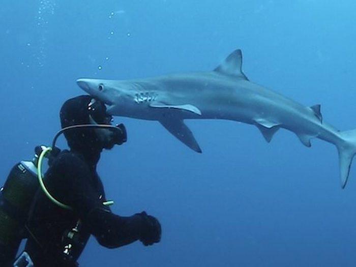 Кевин Шмидт и поцелуй акулы