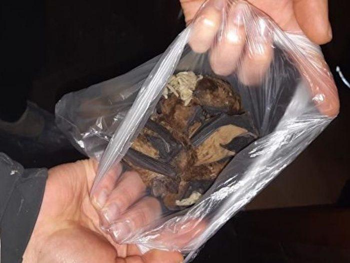 Найденные в пакетах летучие мыши