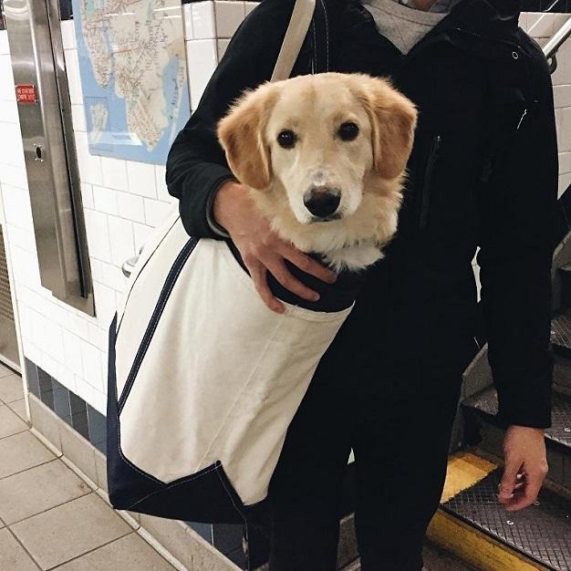 Собака в сумке