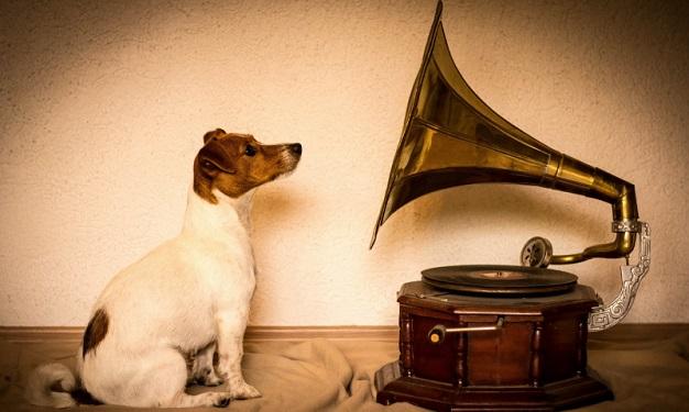 Собака и граммофон
