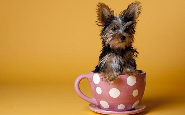 Собака в чашке