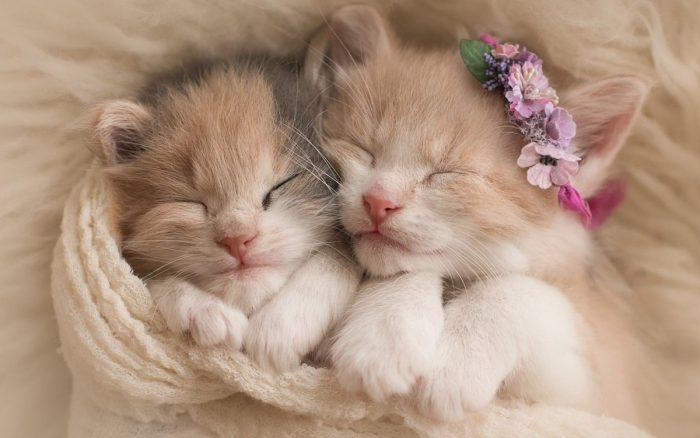 Два спящих котёнка