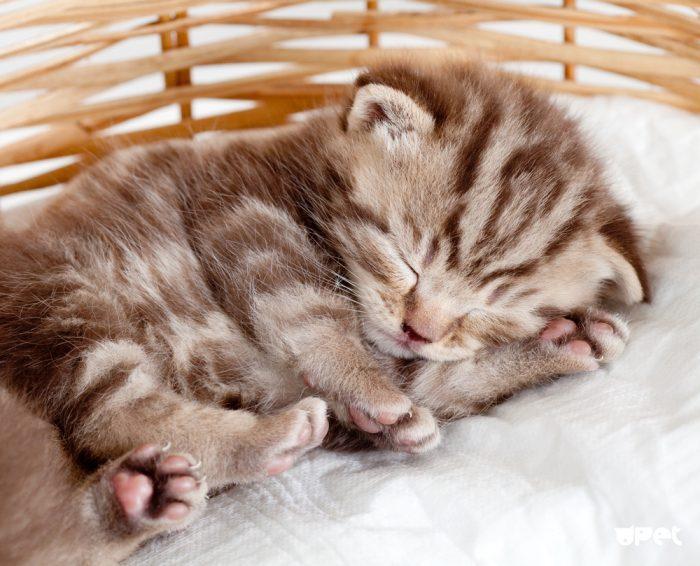Сонный котёнок в корзинке
