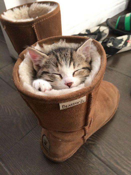 Спящий в сапоге котёнок