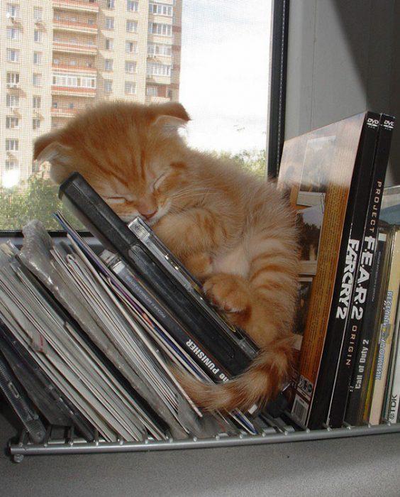 Спящий на книжках котёнок