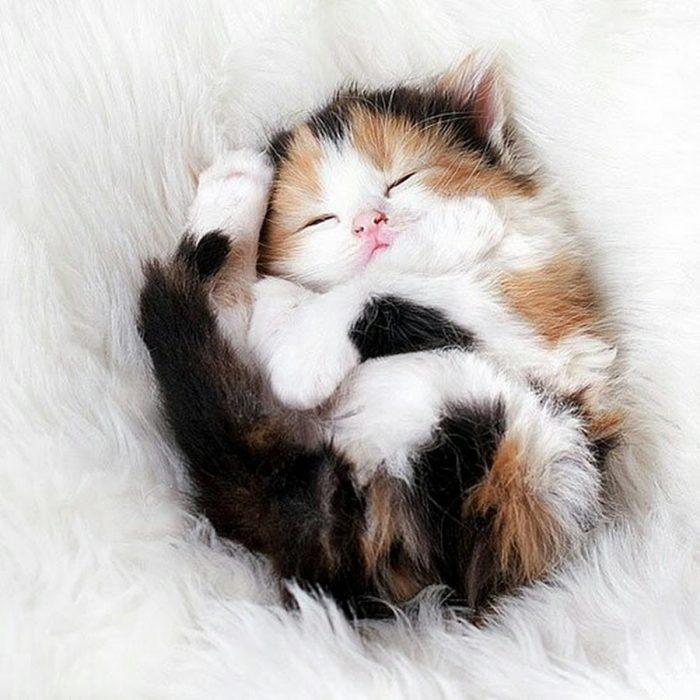 Трёхцветный спящий котёнок