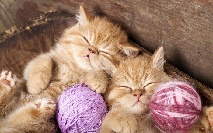 Рыжие спящие котята
