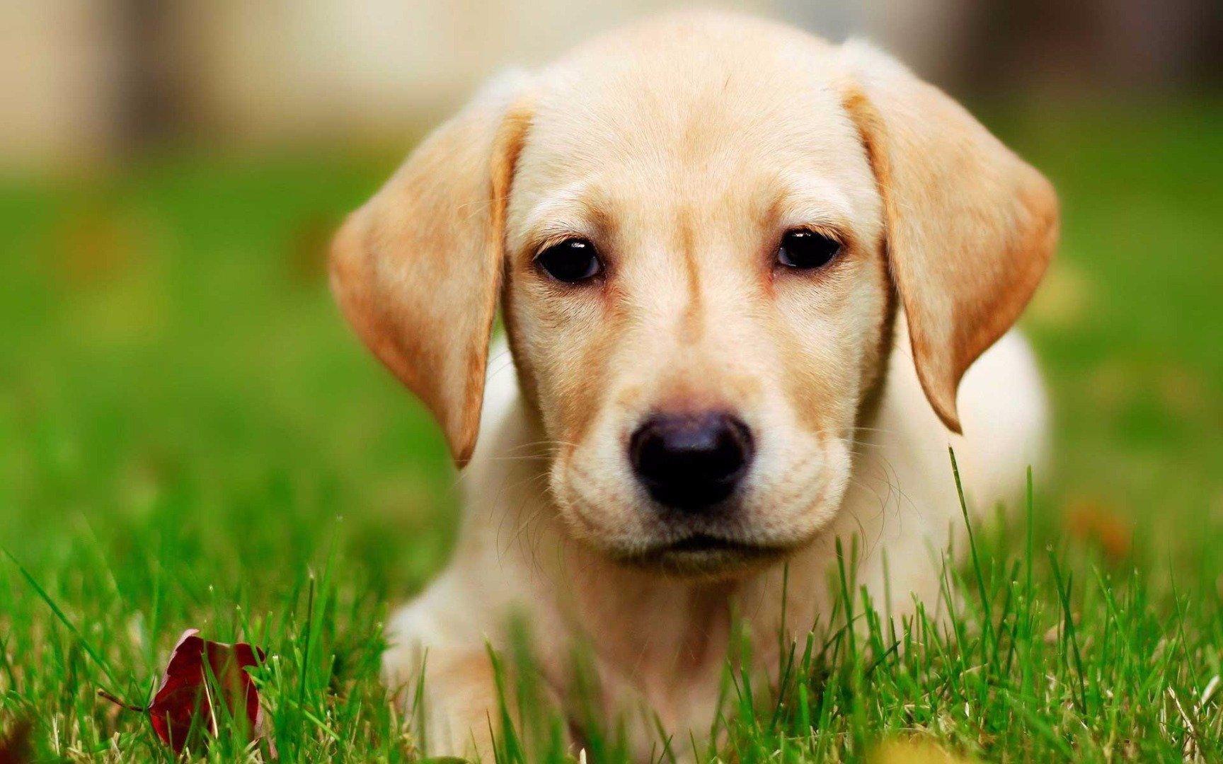 Марфлоксин для собак: инструкция по применению инъекций и таблеток