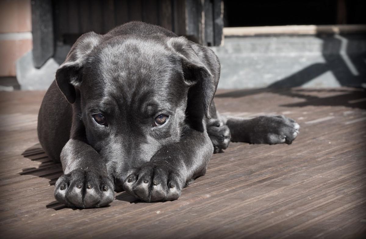 Энроксил для собак: инструкция по применению раствора и таблеток, аналоги