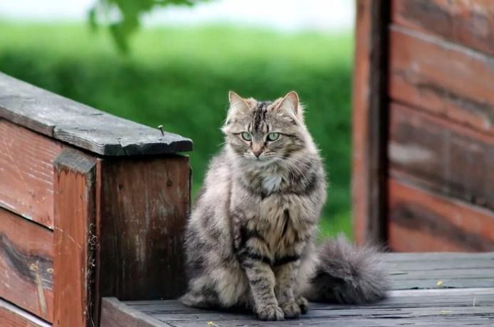 Чужая кошка пришла в дом: чего ожидать