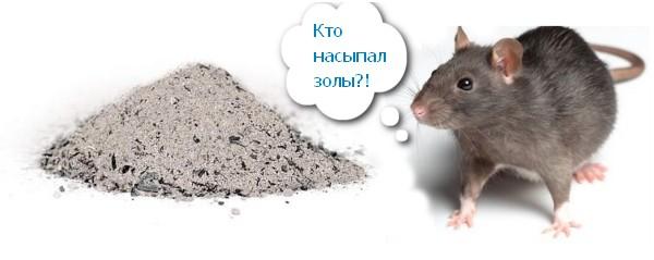 Зола и крыса
