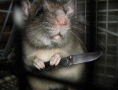 Крыса опасна и без ножа, а уж с ним...