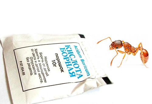 Пачка борной кислоты и муравей