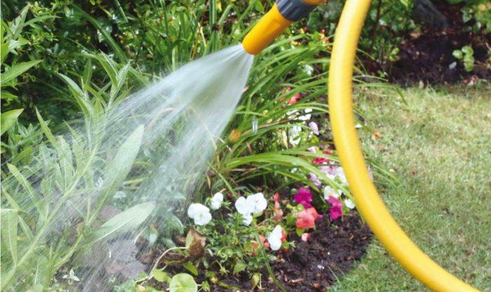 Поливают цветы водой из шланга