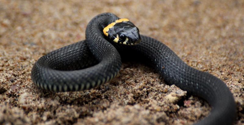 Что делать, если на участке завелись змеи