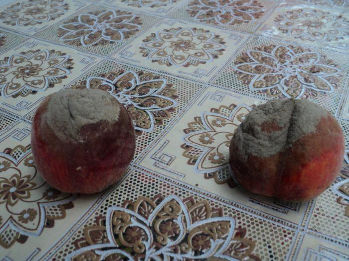 Серая плесень на персиках