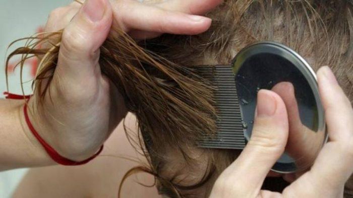 Металлическим гребнем вычёсывают волосы