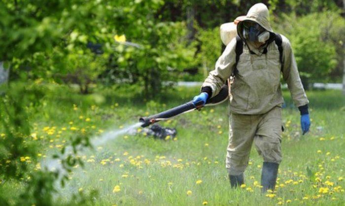 Человек в защитной одежде обрабатывает растения