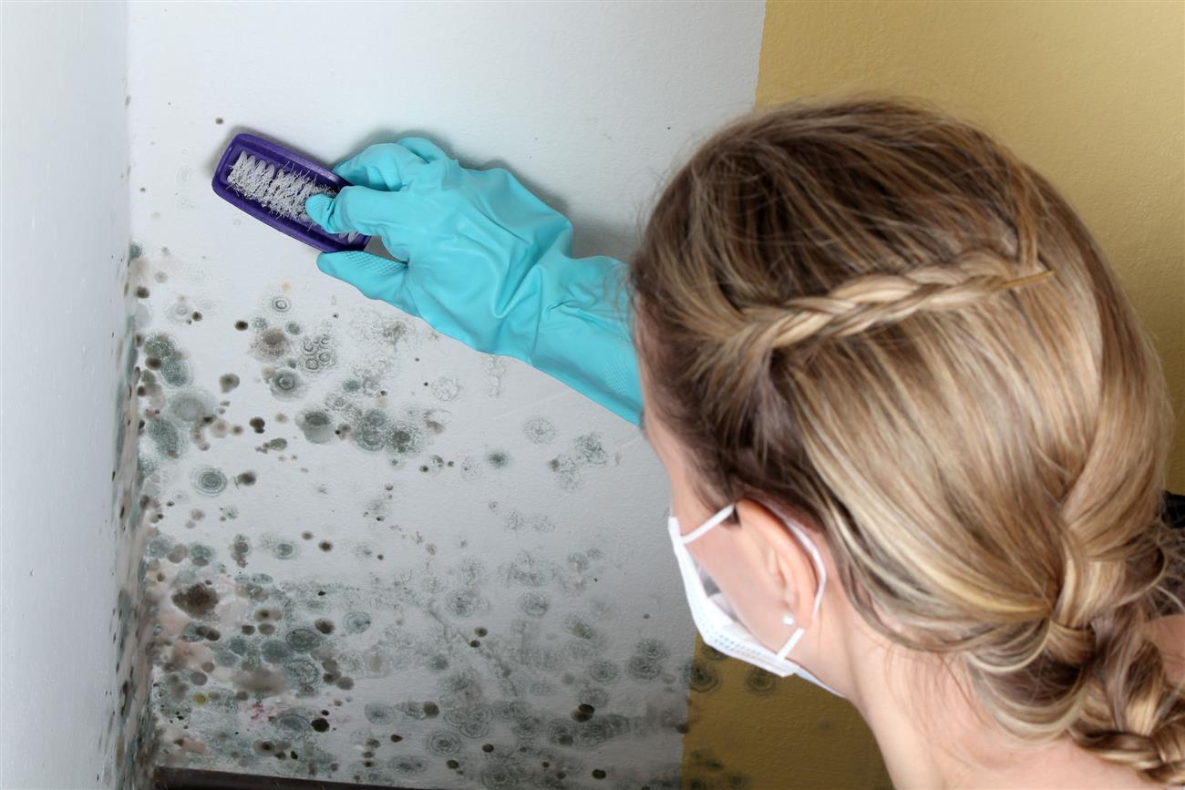 Черная плесень в доме чем опасна: чем опасна черная плесень на стенах в квартире, в ванной для здоровья человека