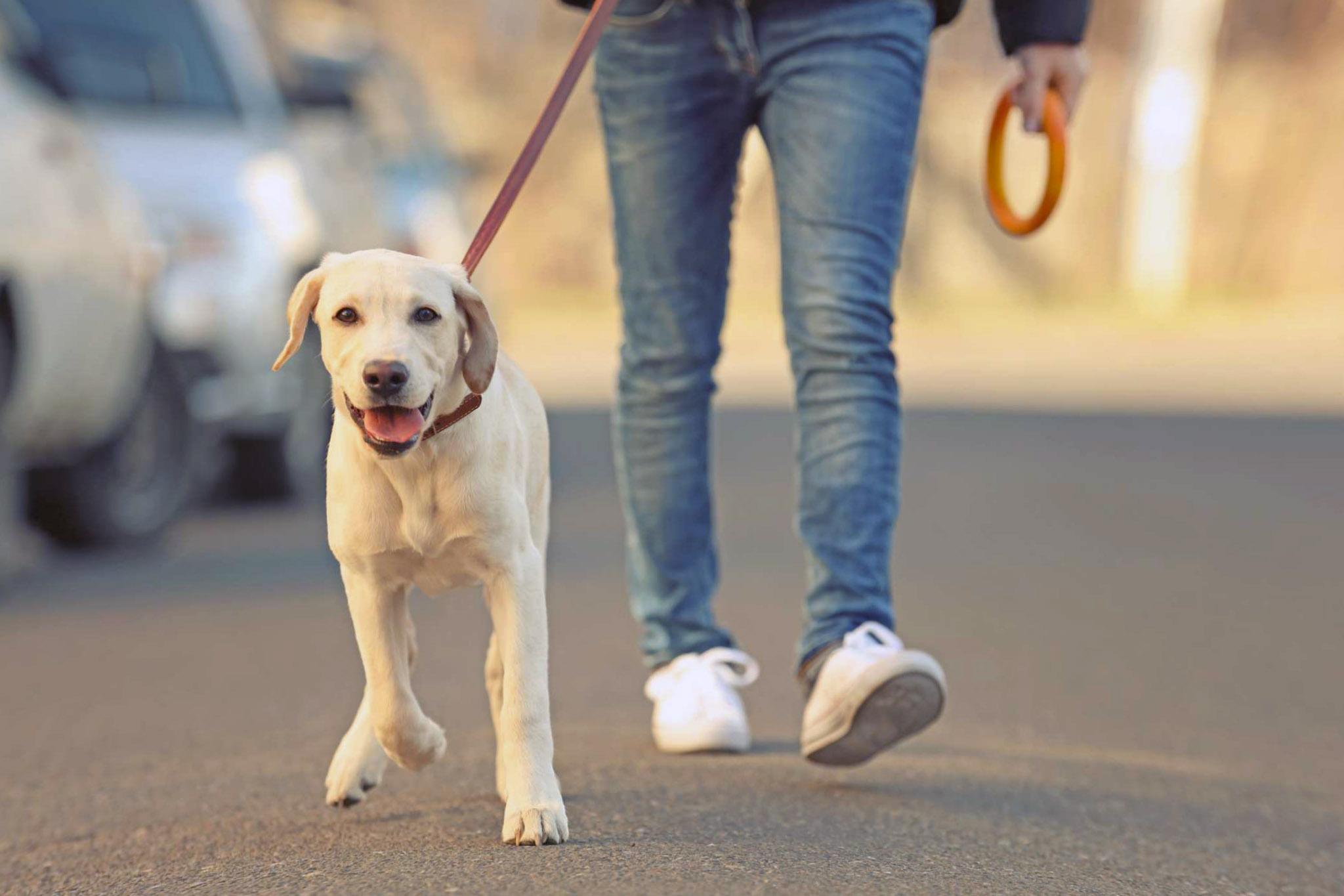 К чему может привести выгул собаки без намордника и поводка