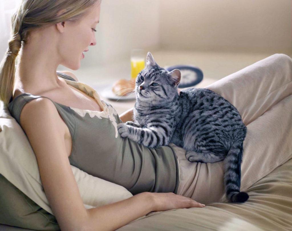 """Почему кошки """"топчут"""" нас лапками: объяснение интересного поведения питомца"""