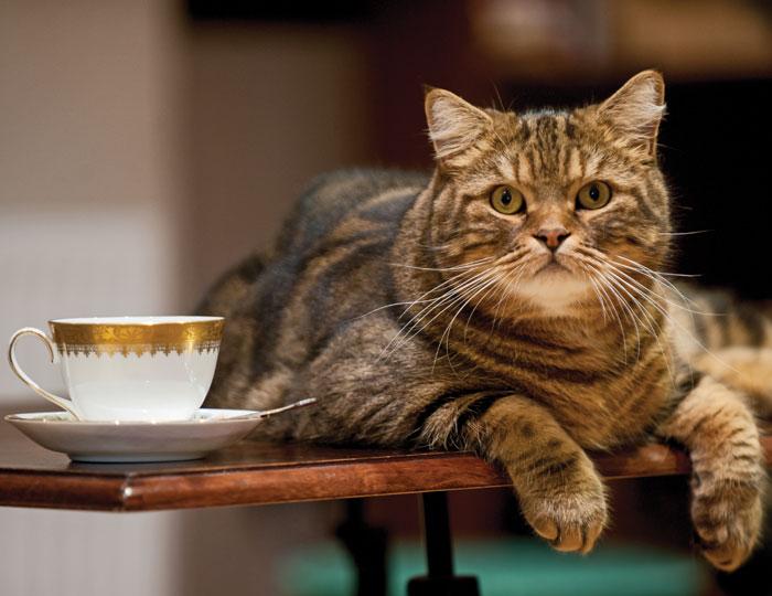 Почему коты любят спать на кухонном столе и как отучить питомца от этой привычки
