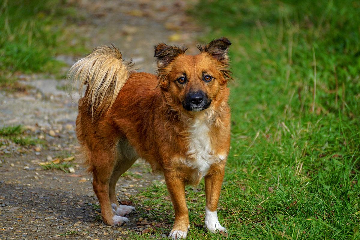О чем предупреждает чужая собака, которая прибилась к вашему двору: приметы и суеверия