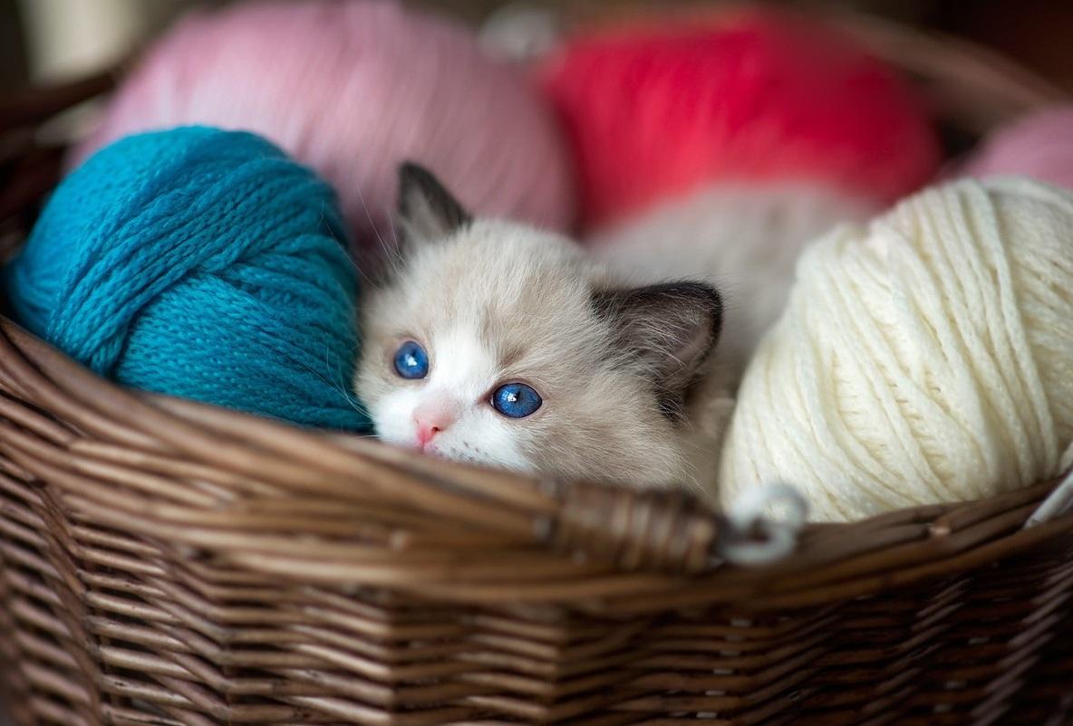 Кошки какого цвета приносят в дом удачу и благополучие