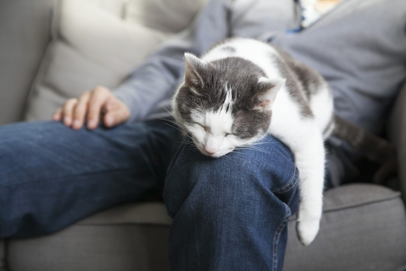 Почему кошки любят спать в ногах хозяина: 3 интересных версии