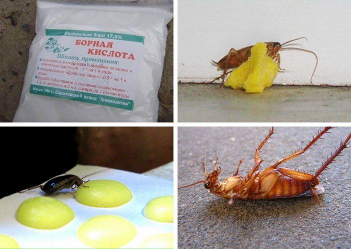 Ловушка для тараканов с борной кислотой