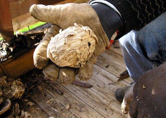 Уничтожение гнезда ос