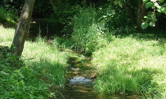 Лесной ручей посреди зарослей травы