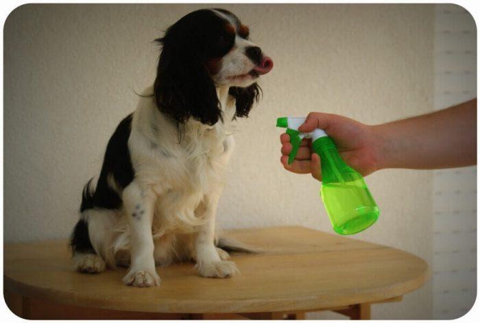 Обработка собаки акарицидным средством