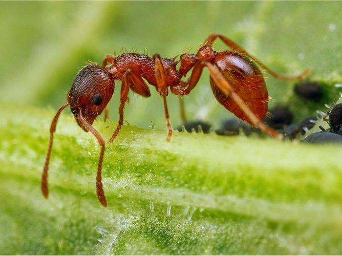 Лесной муравей на поверхности растения