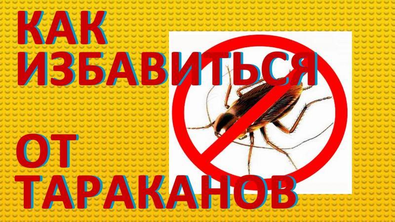 Борьба с тараканами при помощи химических, нехимических и альтернативных способов