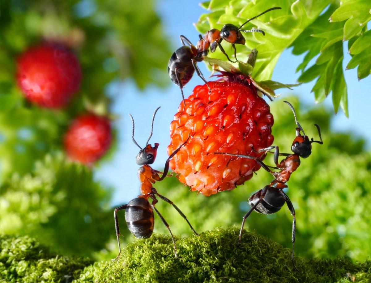 Борьба с садовыми муравьями: народные средства
