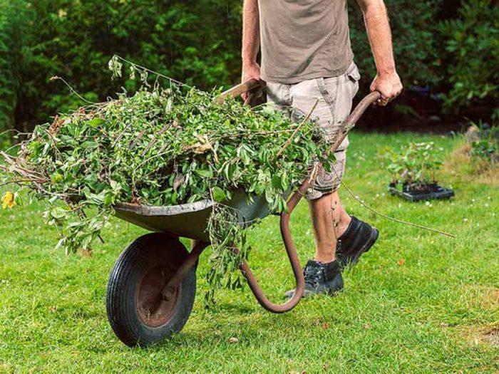 Вывозят сорняки с участка