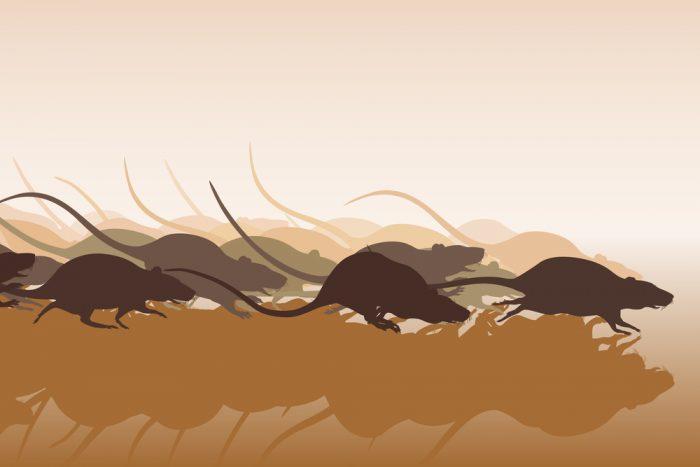 Бегущие крысы и мыши
