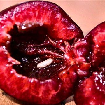 Личинка вишнёвой мухи внутри плода вишни