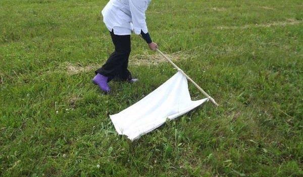 Полотенцем на палке проводят по траве