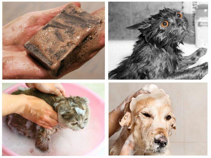 Мытьё кошки и собаки с дегтярным мылом