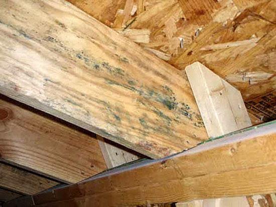 Грибок синевы на деревянных досках