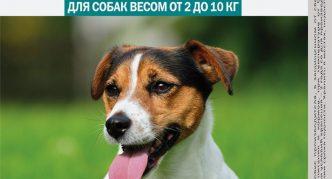 Капли Барс для собак весом от 2 до 10 кг
