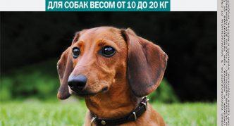 Капли Барс для собак весом от 10 до 20 кг